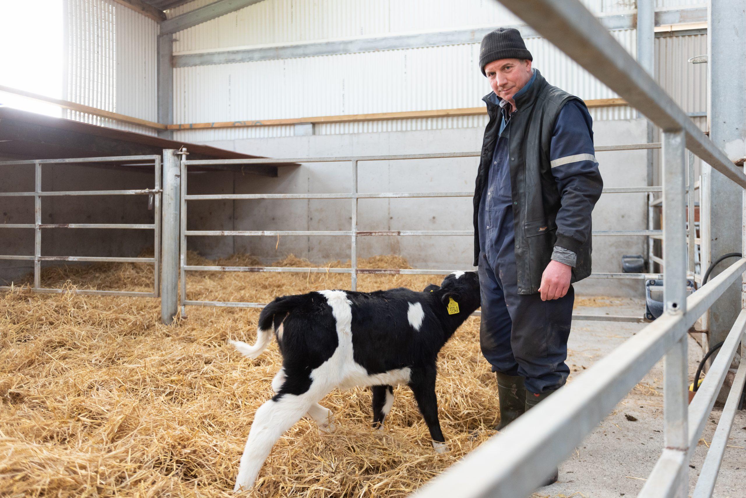 Calf scour control Alpha Calf Max Cleanline