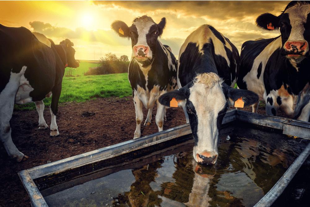 Dairy hygiene and dairy health